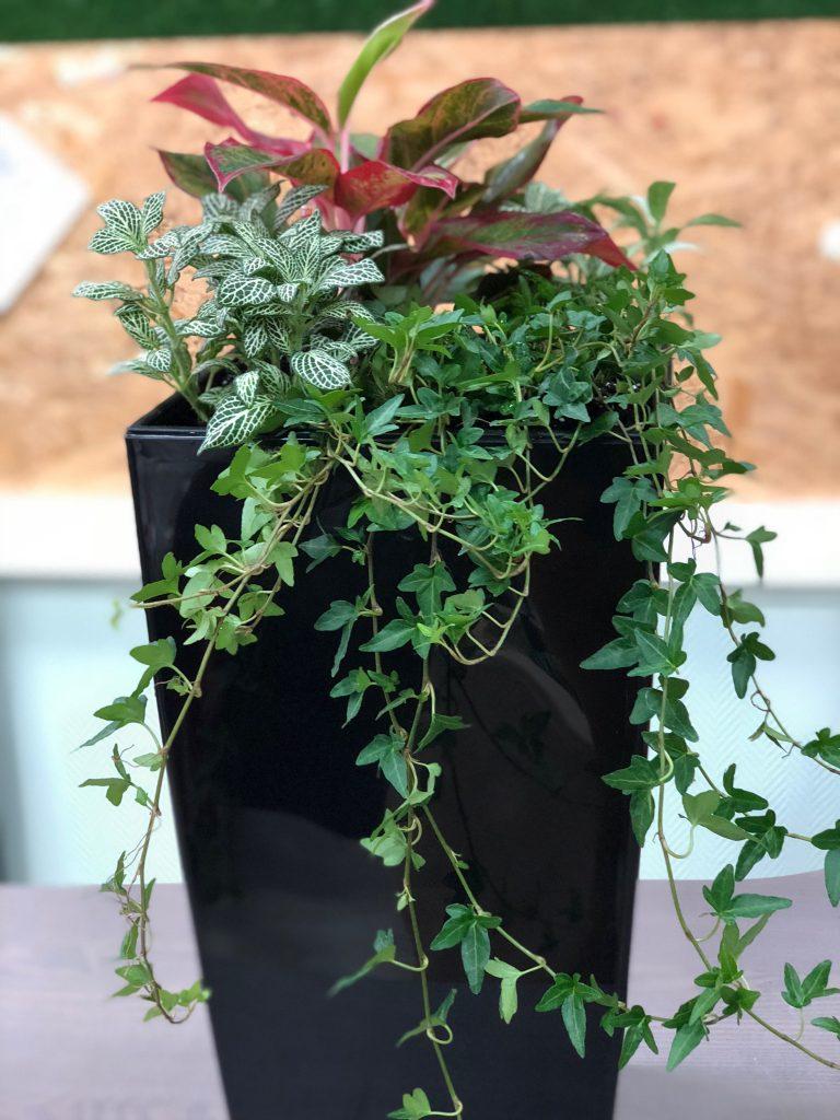 три растения в кашпо
